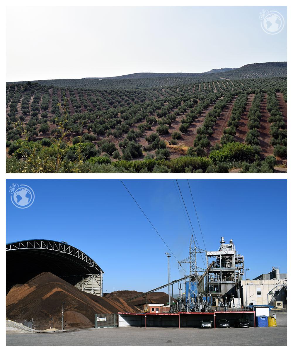 Campo de olivos y planta generadora de electricidad
