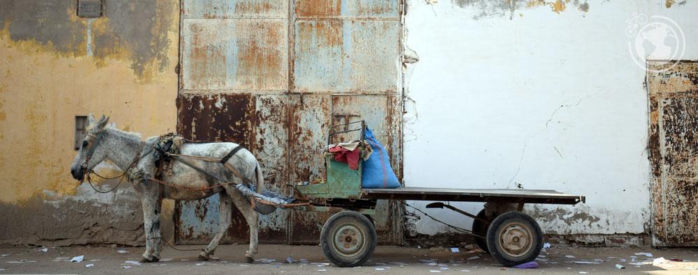 Caballo preparado para transportar. Tan-Tan, Marruecos