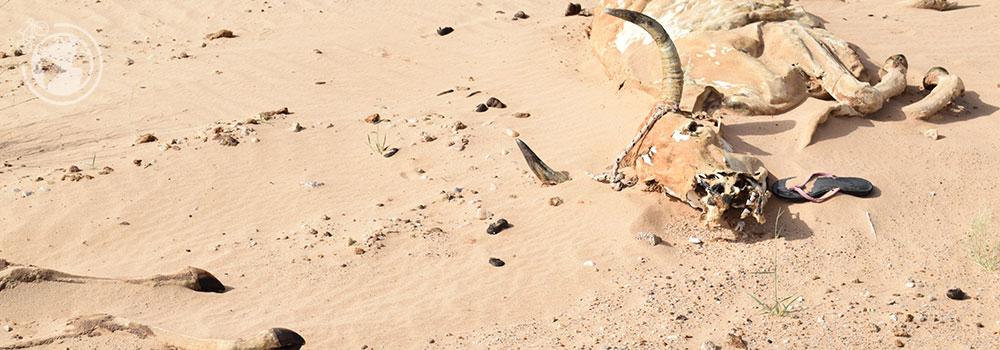 mauritania_06