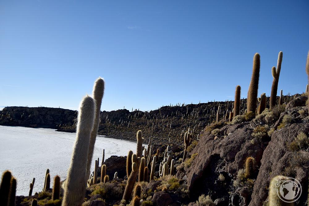 Cactus en la Isla Incahuasi.